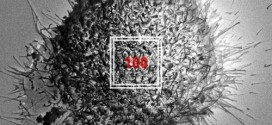 BlackNut100